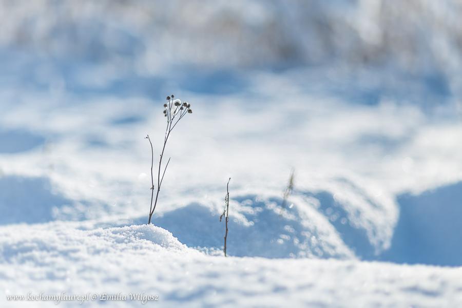 Zimowa pocztówka