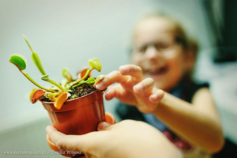 mucholowka-rosiczka-kwiaty-do-pokoju-dziecka