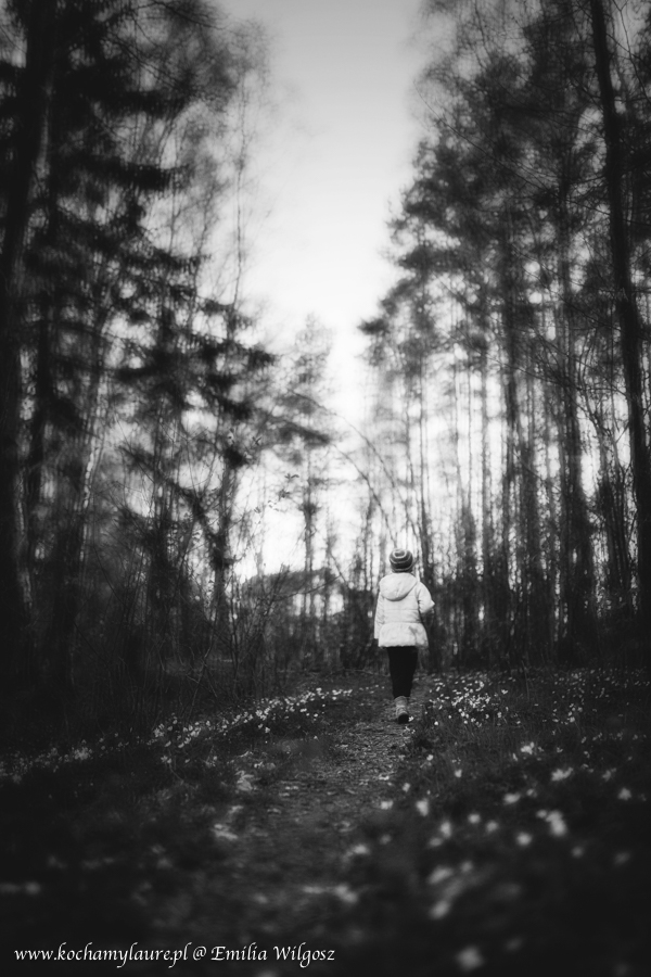 Sparer w lesie - zdjęcia bw