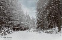 Zima 19 – luty 2021