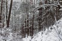 Zima 15 – luty 2021